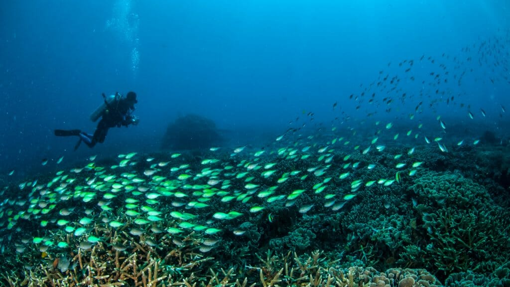 Underwater shot of diver above coral and shoal of neon green fish.