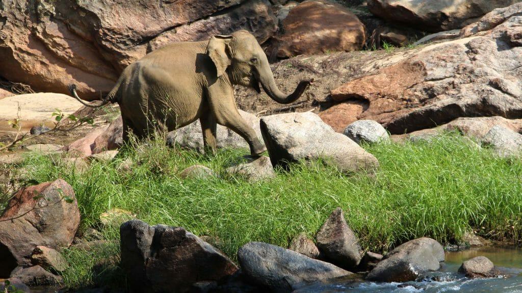 Elephant, Gal Oya National Park, Sri Lanka