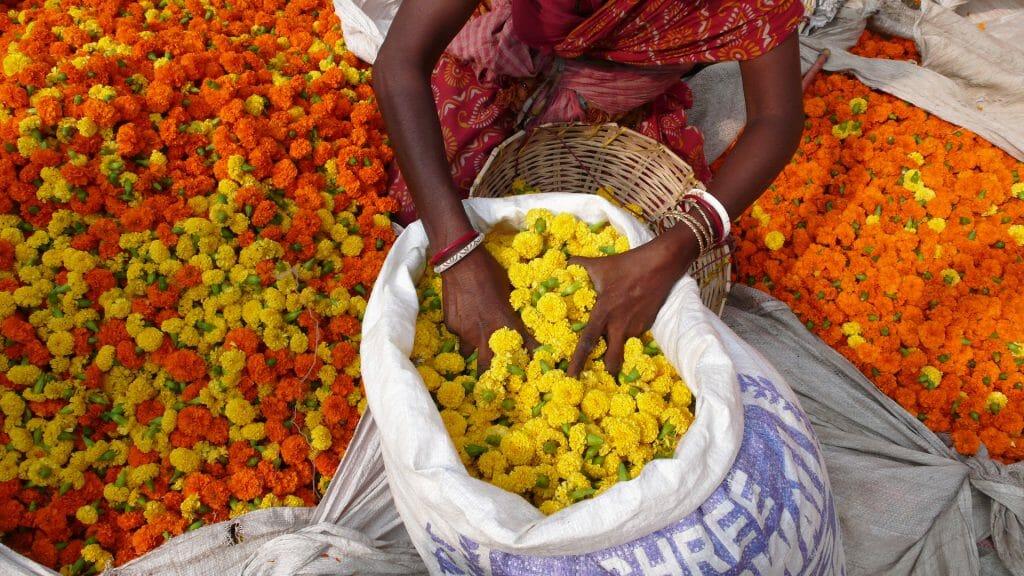 Flowers at Market, Calcutta, India