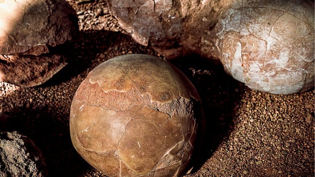A close up of fossilised dinosaur eggs