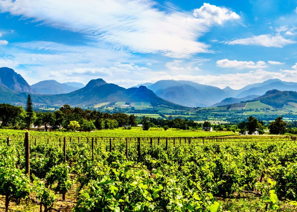Franschhoek Valley, Vineyards, Cape Winelands, Drakenstein mountains, South Africa