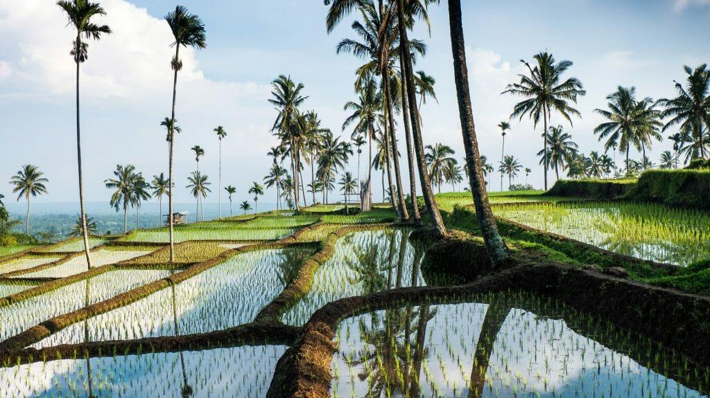 Indonesia, Bali rice paddy