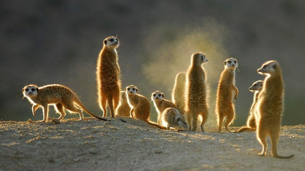 Kalahari Reserve, South Africa
