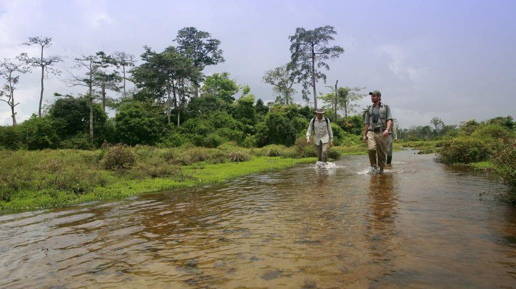 Lango Camp Walking Trail, Lango, Odzala, Rep of Congo