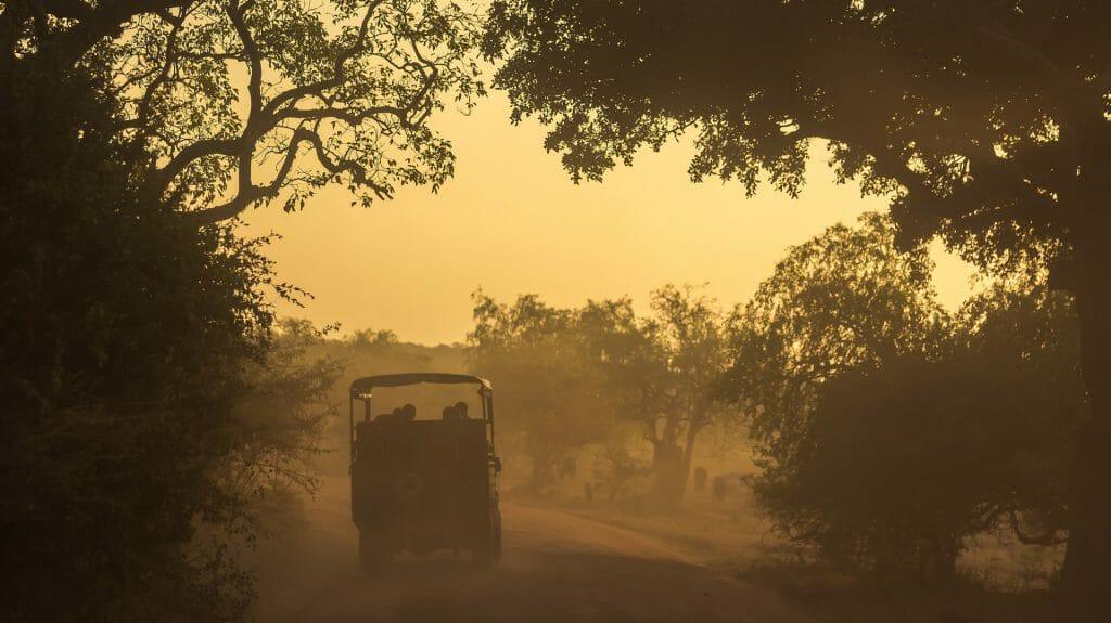 Morning Game Drive, Yala National Park, Sri Lanka