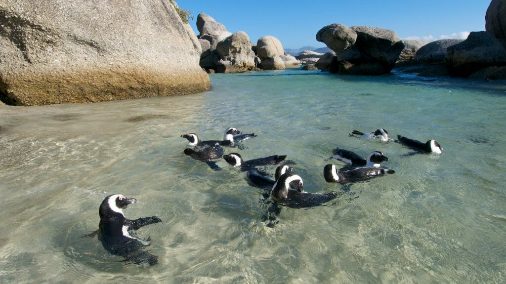 Penguins, Cape Town, South Africa