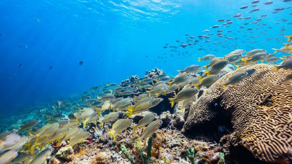 Tropical Fish in Saint Lucia