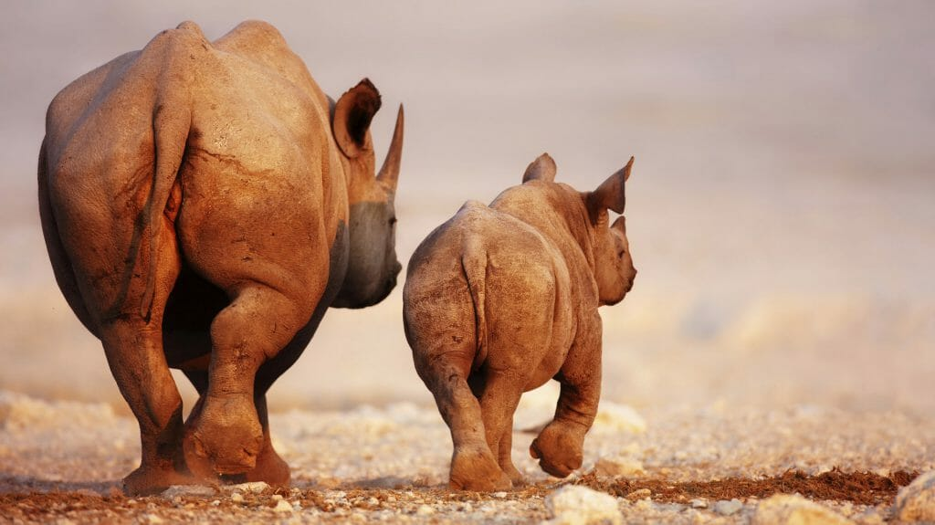 Rhino Family, South Africa