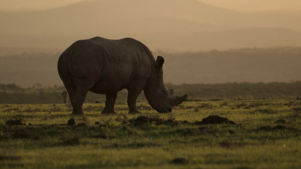 Rhino silhouette, Laikipia, Kenya