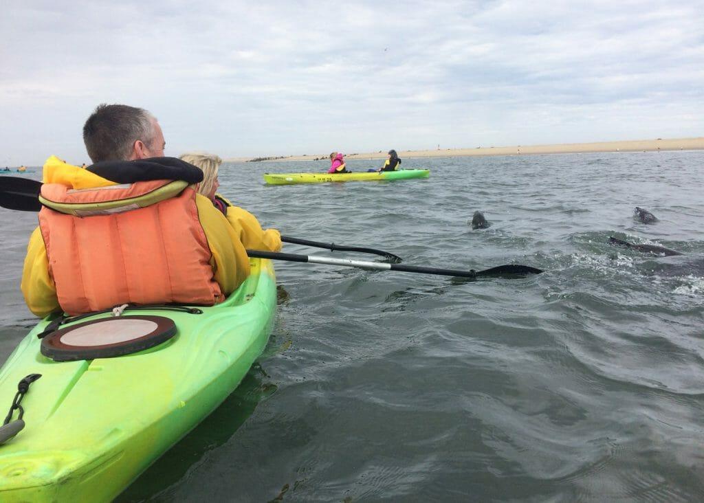 Seal Kayaking, Swakopmund, Namibia