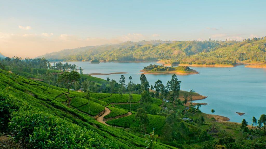 Tea Estates, Sri Lanka