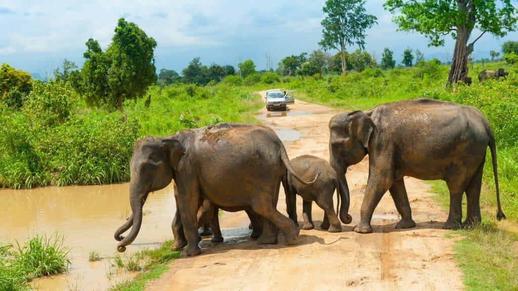 Wild Elephants, Uda Walawe NP, Sri Lanka