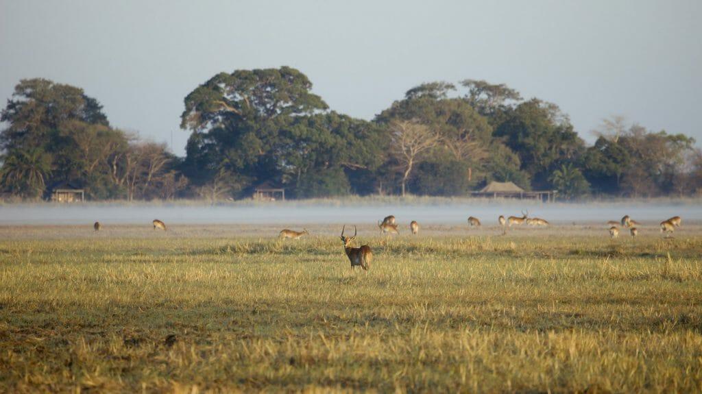 Busanga Bush Camp Front view of Camp, Kafue National Park, Zambia