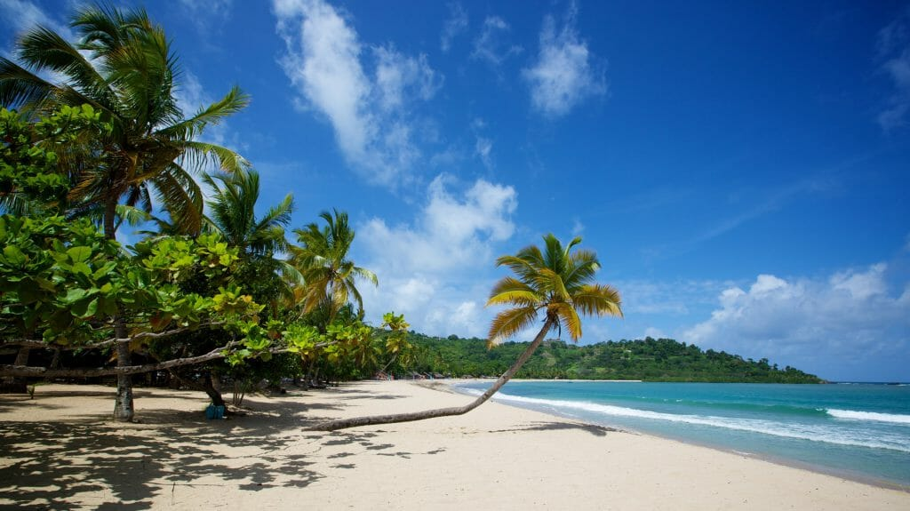 Overhanging palm tree on the white sands of Andilana Beach, Nosy Be, Madagascar