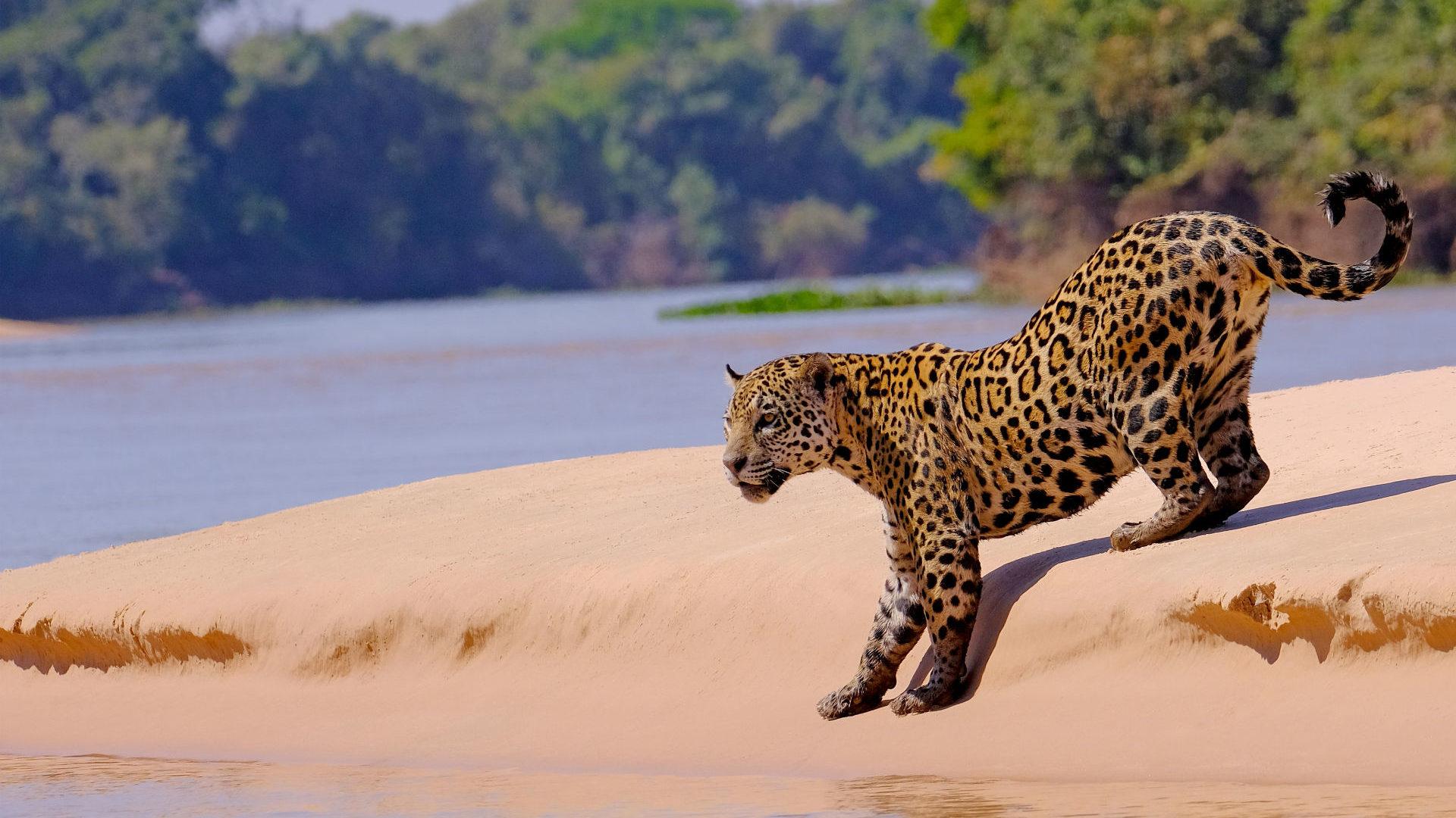 Blog Brazil Revisited The Pantanal Amazon And Rio Coastline