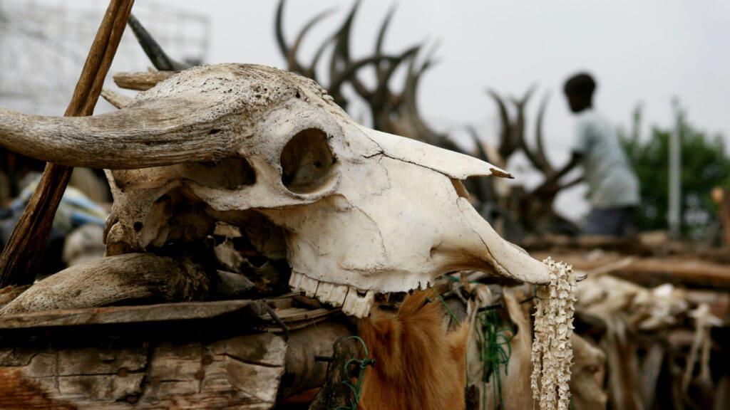 Voodoo skull, Togo