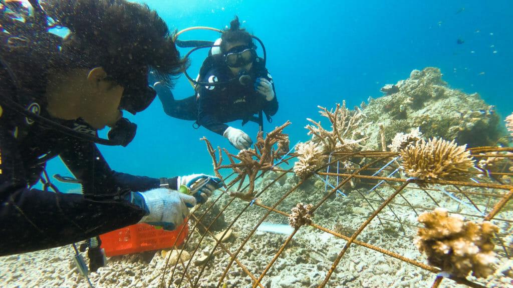 Misool coral divers