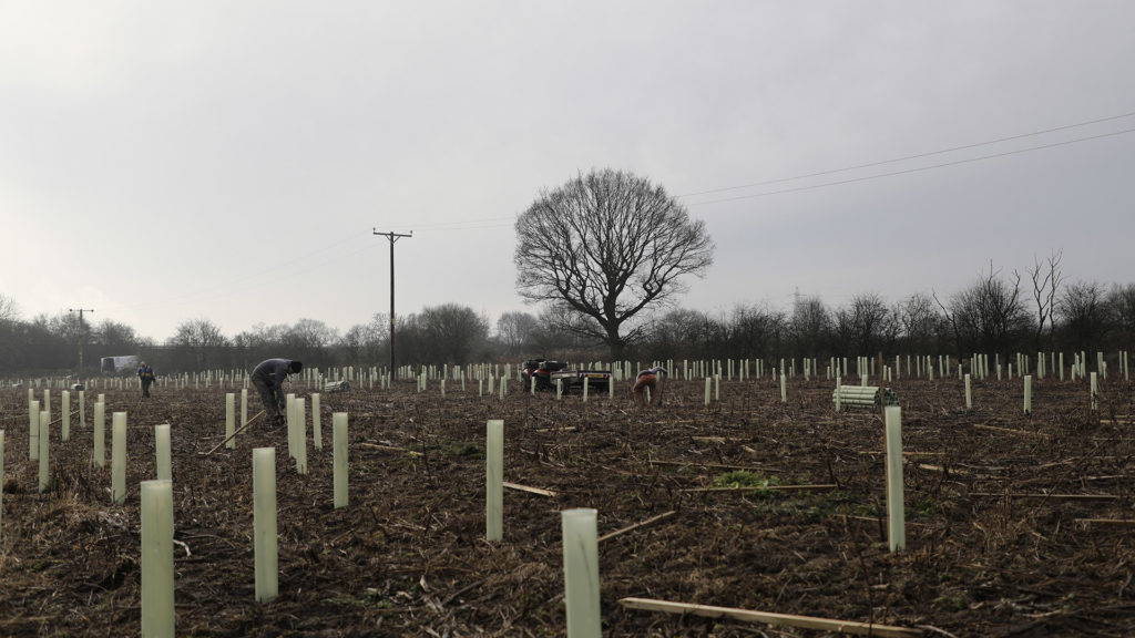 Newly planted trees in Scunthorpe