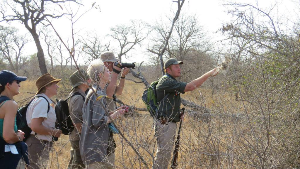 Bush Leader, South Africa, Illona FAM 2013