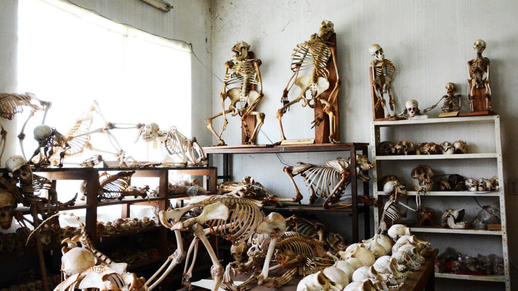 Client Nicky Dunnington Jefferson primate museum