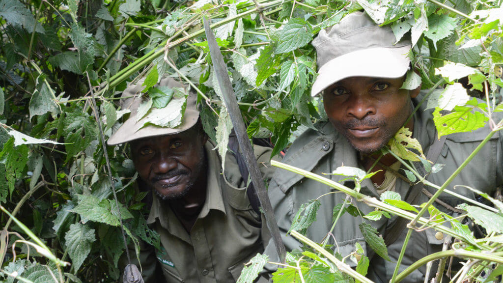 DRC guides for gorilla treking