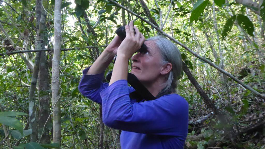 Steppes Travel staff member in blue top holding binoculars to eyes looking up to canopies in Indonesia.