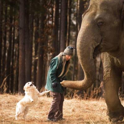 Elephant Conservation, Carol Buckley, Elephant Aid International
