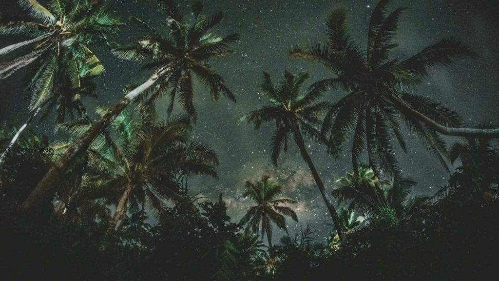 night sky, trees on island with palm trees